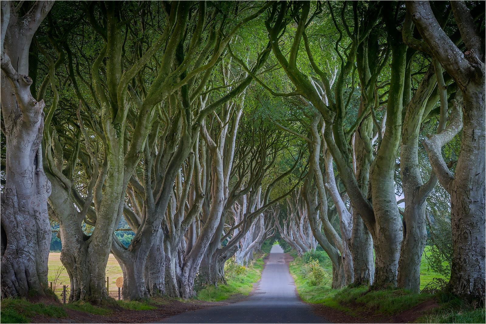 Wanddeko Nordirland die dunklen Hecken