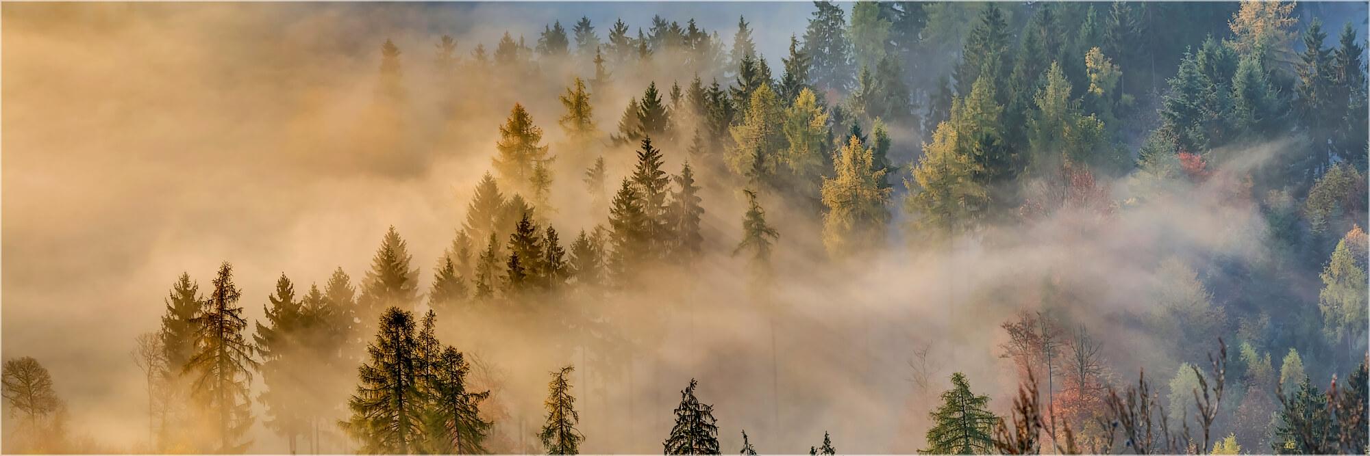Panoramafoto Nebelwald bei Notweiler in der Pfalz