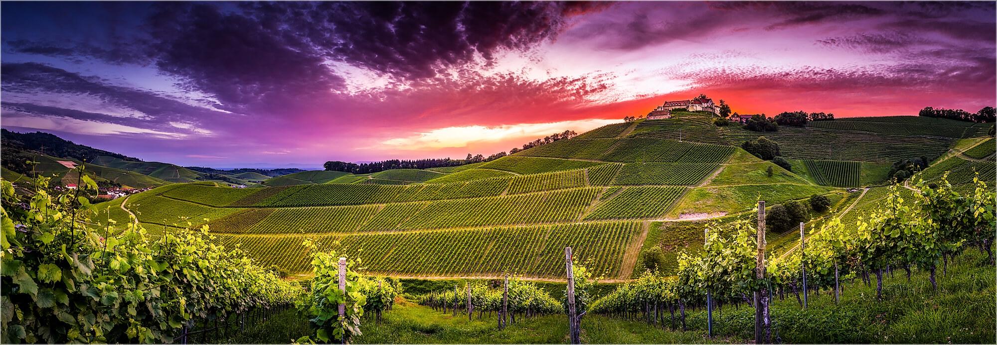 Panoramabild Sonnenuntergang in den Weinbergen der Ortenau
