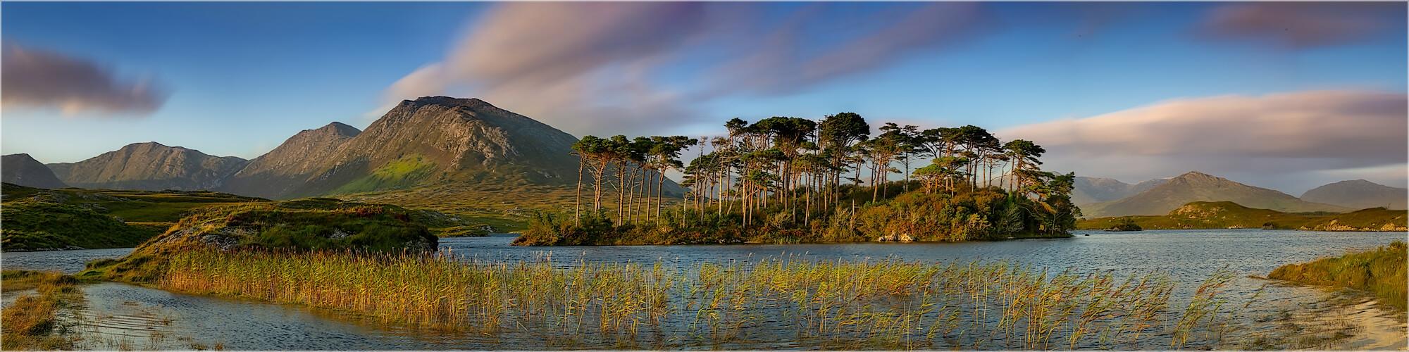Panoramabild Pine Tree Island Connemara National Park Irland