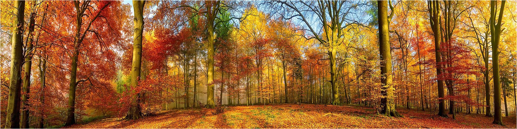 Panoramabild Leuchtender Herbstwald Indian Summer