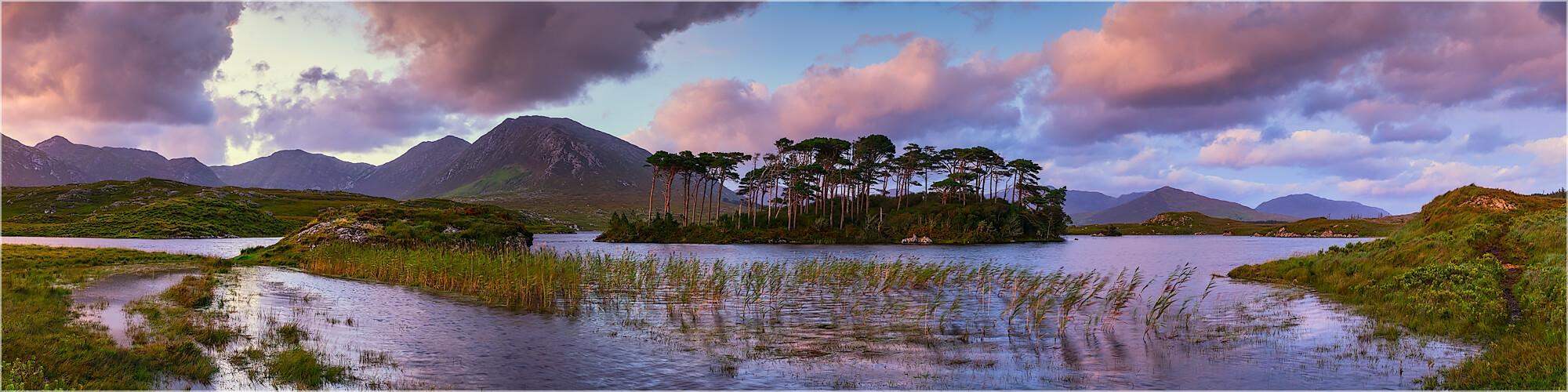 Panoramabild PineTree Insel Irland