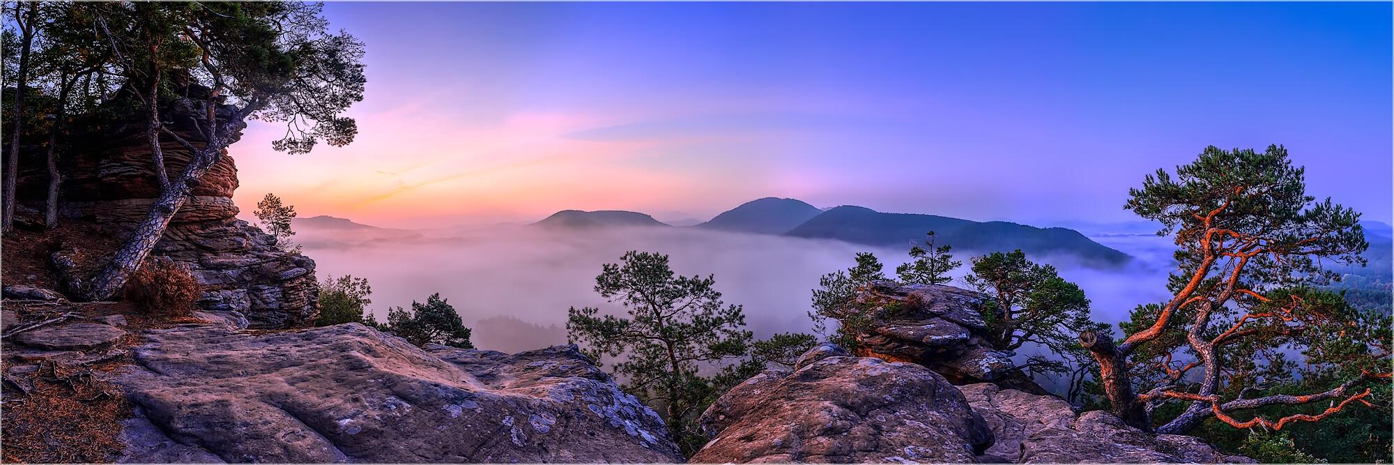 Panoramabild morgens im Pfälzerwald