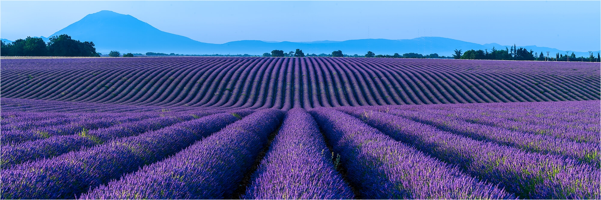Panoramabild Lavendel in der Provence Frankreich