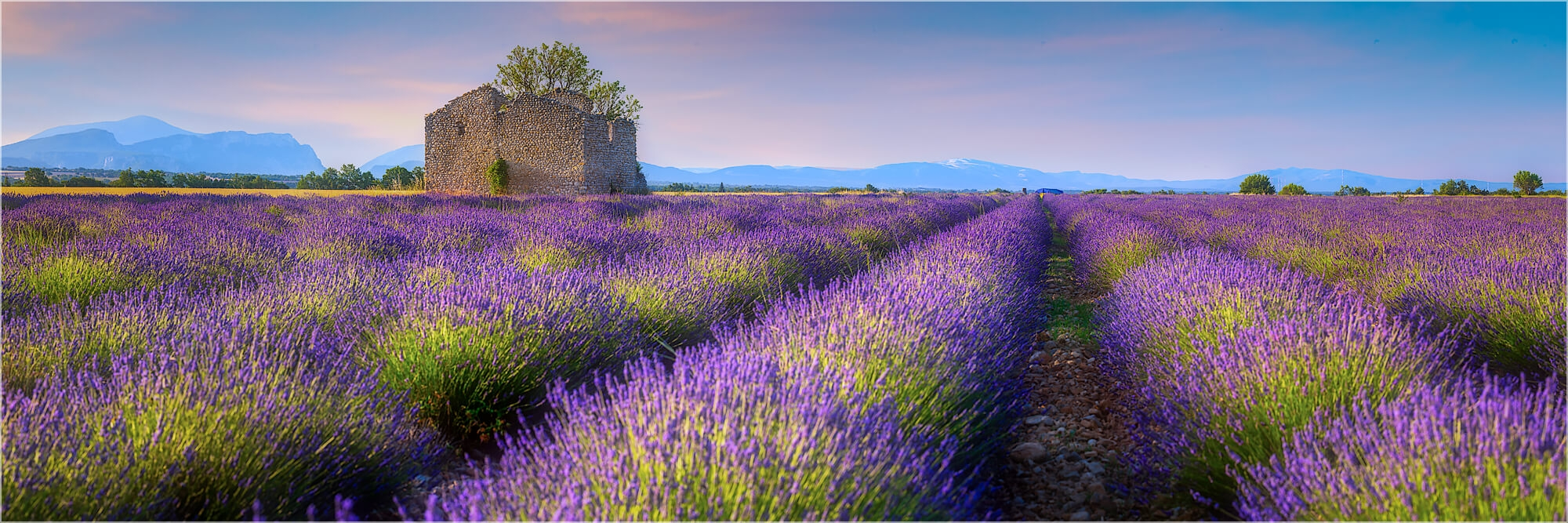 Panoramafoto Ruine im Lavendelfeld Provence Frankreich