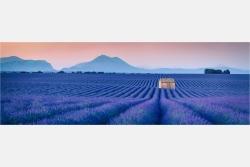Panoramabild Endlos blaue Lavendelfelder der Provence