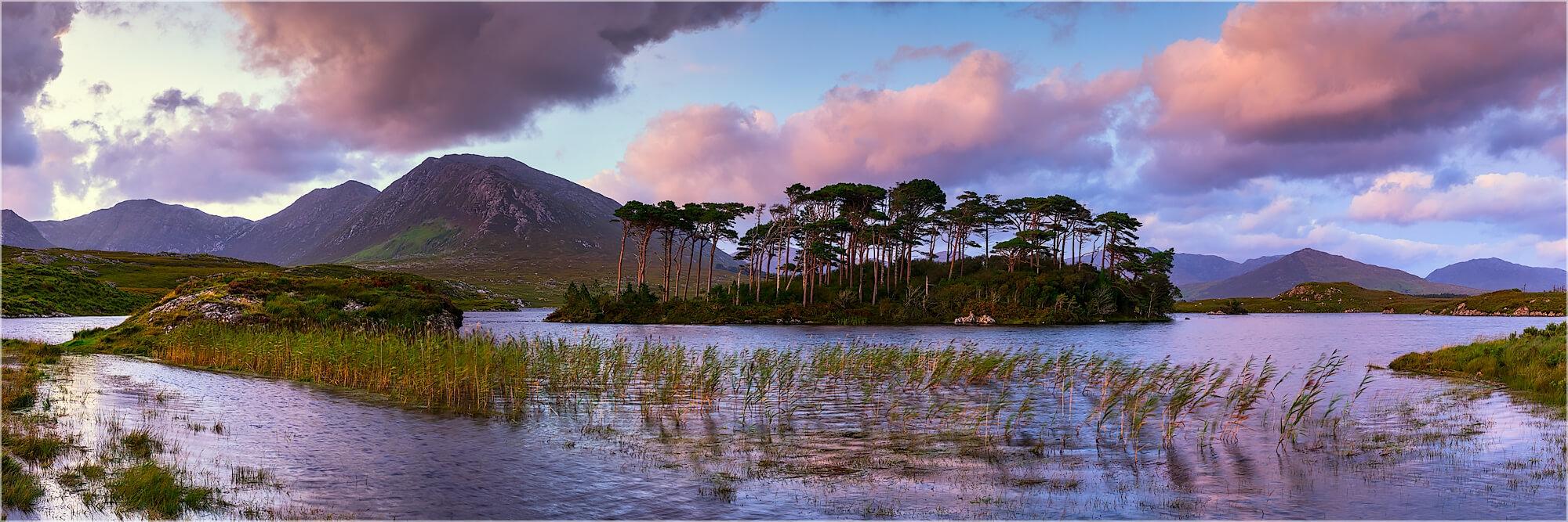 Panoramafoto Pine Tree Island Connemara Park Irland