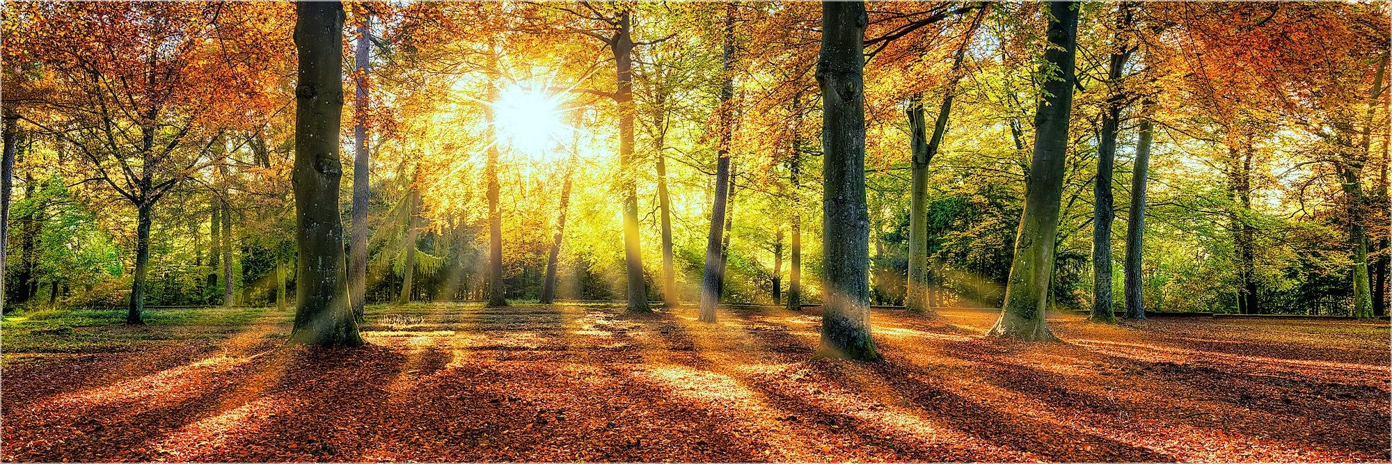 Panoramafoto großer Herbstwald